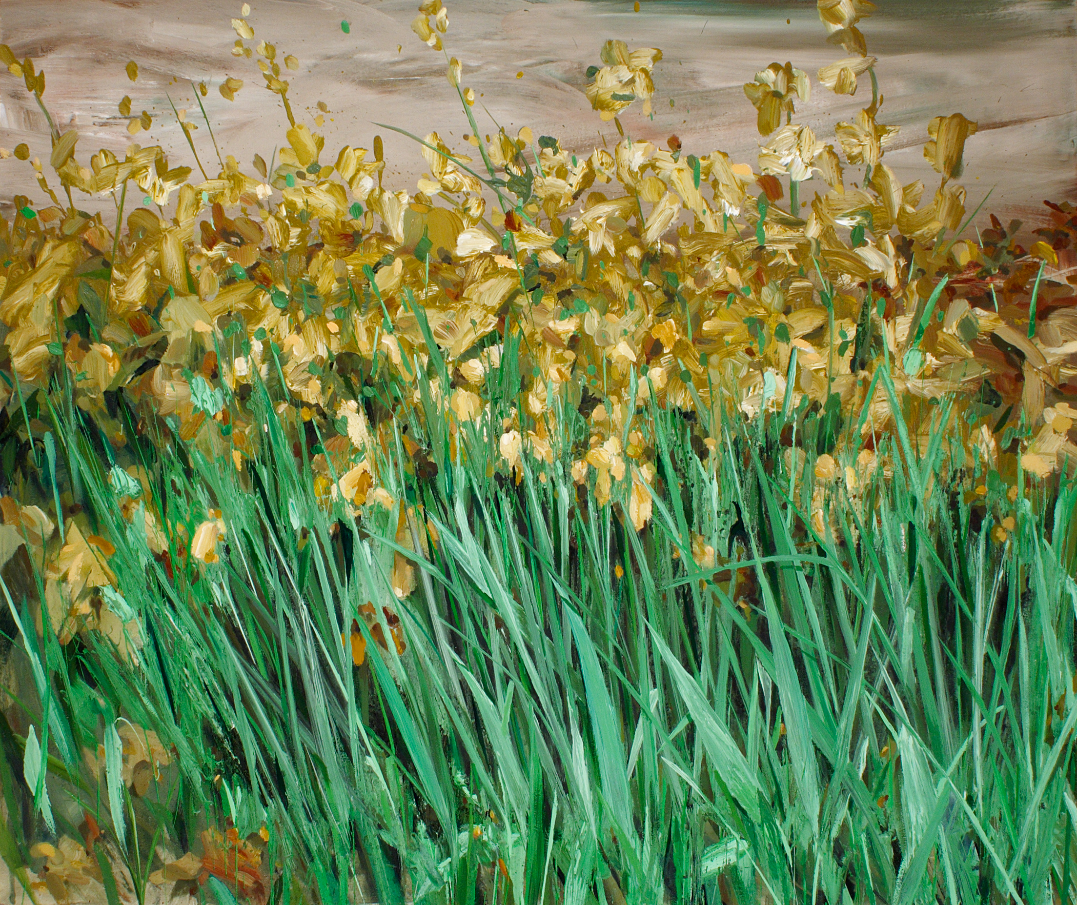 Field of Golden Irises